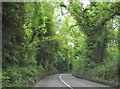 Woodland at Tullyweel