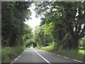 The tree lined R162 near Germanagh, Co Meath