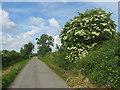 Country road at Mullaghey, Kells