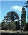 In Lord Headfort's arboretum