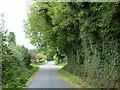 Leafy crossroads