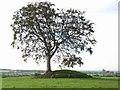 Mound at Rathcoon, near Navan, Co. Meath