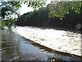 Boyne Weir at Dollardstown