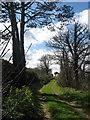 Lane to Lowther Lodge, Knocknagin