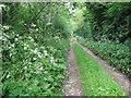 Farm track at Dardistown, Co. Meath