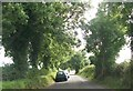 Tree lined road approaching the Hill of Tara