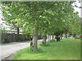 Tree lined road, Co Meath