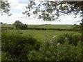 Pasture Fields, Timoole, Co Meath