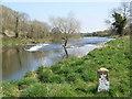 Weir on Boyne Near Stackallen