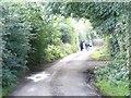 Backroad near Trim, Co. Meath